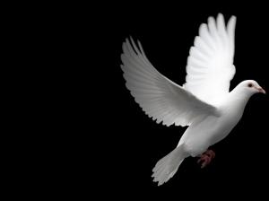 Uçan-Barış